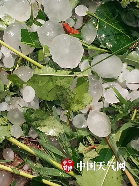 北京顺义遭冰雹突袭 树木折断窗户碎裂喜鹊被砸死