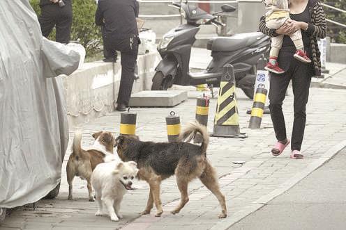 图:流浪狗不仅会传染疾病,同时也会带来不安全的隐患。