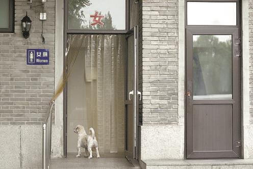 图:一只没有项圈的狗在公厕外徘徊。
