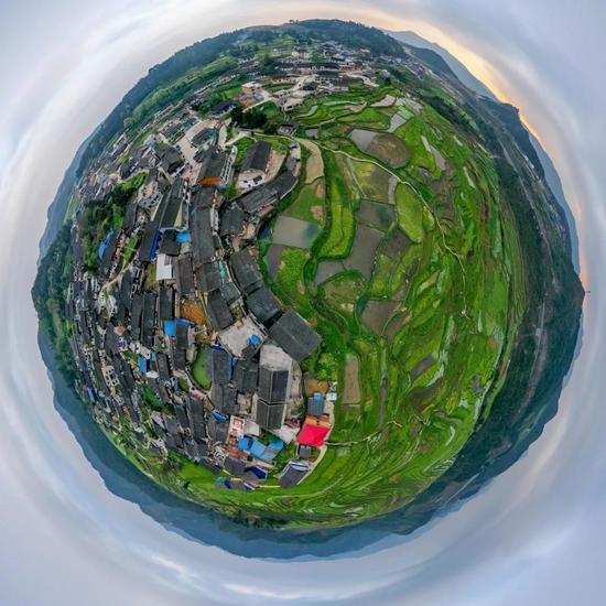 贵州省丹寨县龙泉镇民居掩映在碧绿的高要梯田中(无人机全景照片) 欧东衢 摄