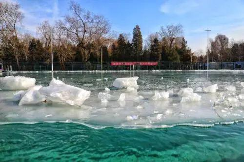 """清华的西湖游泳池,是校内的冬泳""""圣地""""。本文图片都为受访者提供。"""