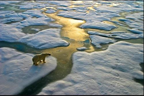在俄罗斯北极地区,一头北极熊正在捕猎。(盖帝图像)