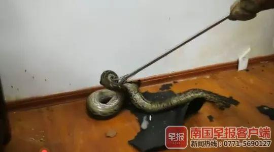 新闻资讯-免费yoqq银行员工正开会,天花板突然掉下大蟒蛇,视频慎点yoqq资源(4)