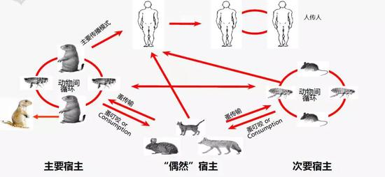 鼠疫傳播方式(圖片來源:生命時報)