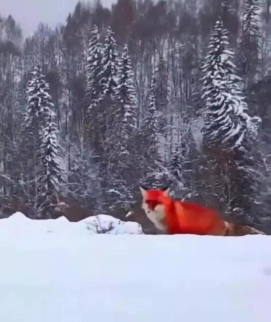 """何女士发布的""""火狐""""视频截图"""