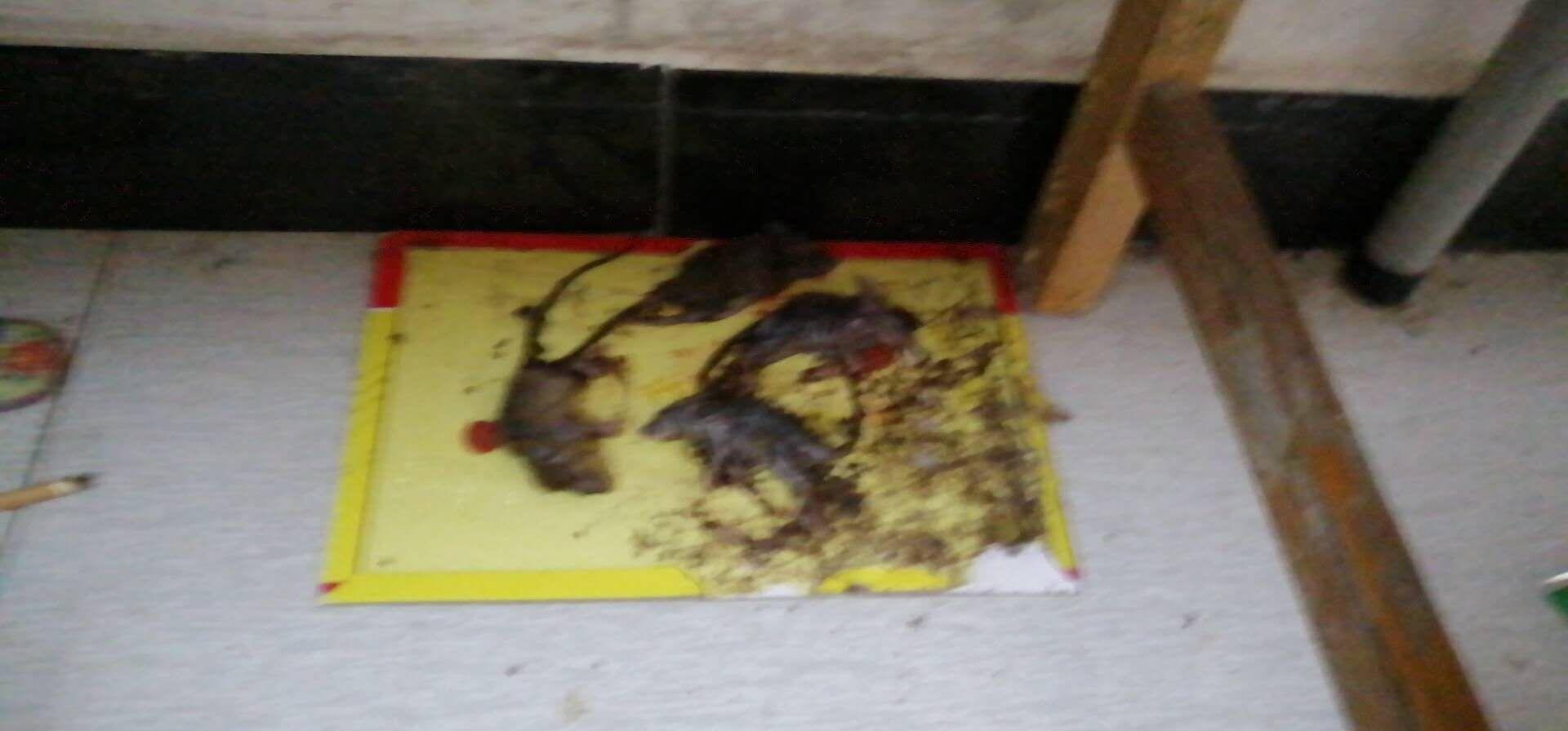 陈浩家人挑供的宿弃内发现物化老鼠的照片。受访者供图