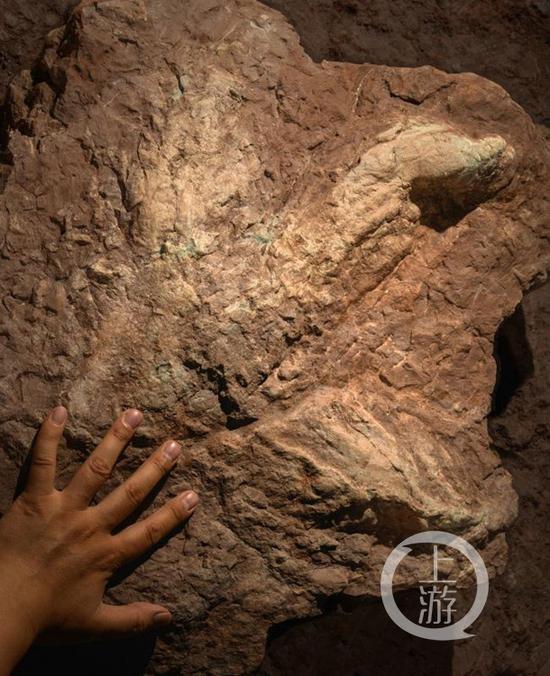 修路挖出霸王龙脚印被民间收藏者收藏
