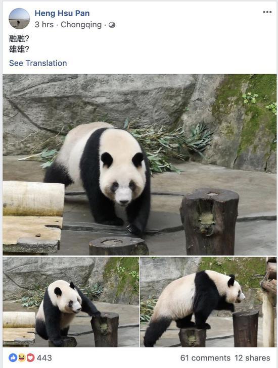 臺媒:高雄證實大陸將贈送1對大熊