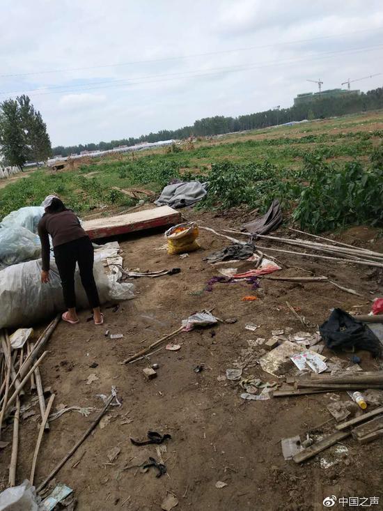 图3:王楼村的耕地被突然铲平后,村民们正在收拾地里的塑料大棚。