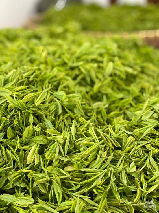 △安吉白茶的品牌价值已达41亿。(总台央视记者李辉拍摄)