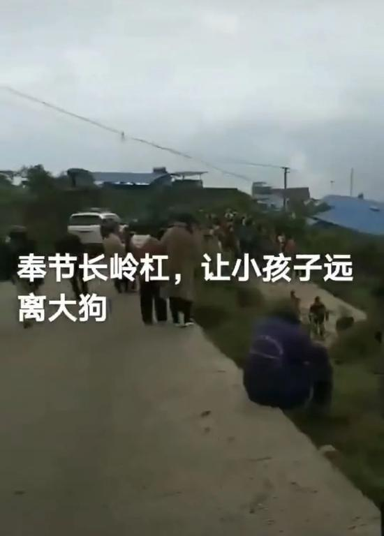 揪心!8岁男童上学途中被狗咬死,狗主人已被控制