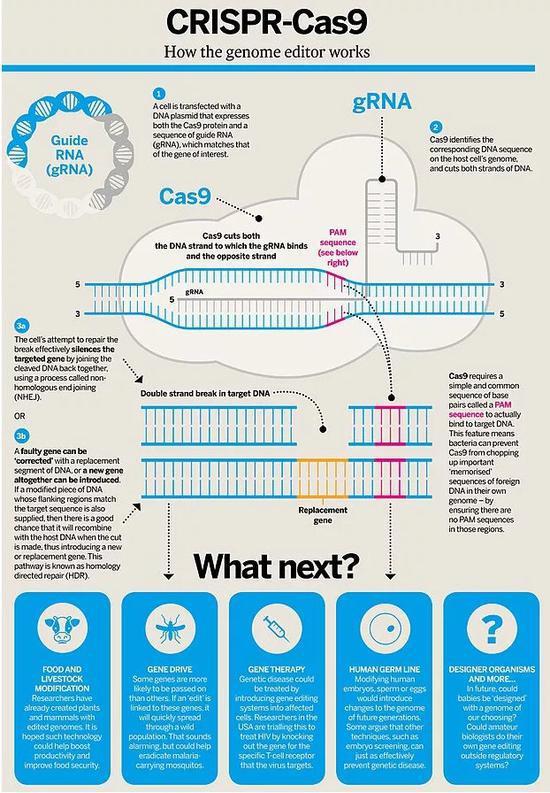 CRISPR-cas9技术的原理图