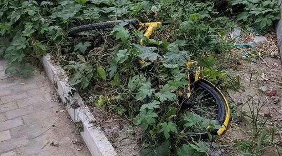 被遗弃在草丛中的小黄车。