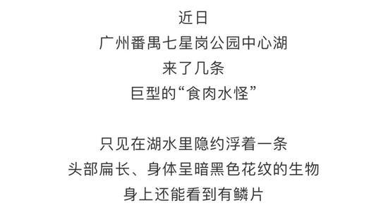 """广州公园湖内惊现巨型""""食肉水怪""""?缉拿归""""岸""""!"""