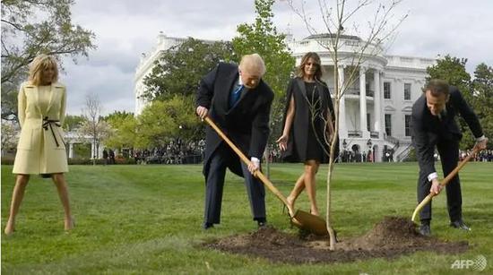 ▲資料圖片:馬克龍2018年訪問美國時,曾在白宮草坪的顯眼位置與特朗普種下一棵橡樹,以此象征美法友誼長存。(法新社)