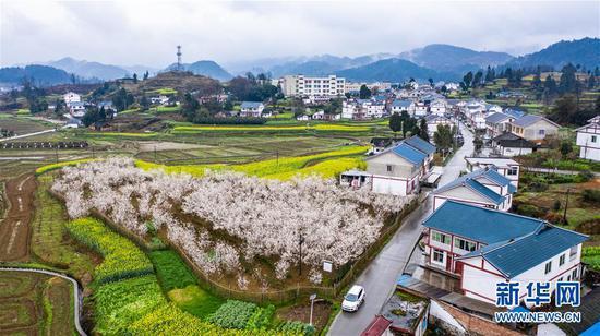 这是2020年2月28日拍摄的遵义市播州区枫香镇花茂村风貌(无人机照片)。 新华社记者 陶亮 摄