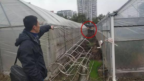温海萍指认以前发现女友尸体的大致方位(红色区域)