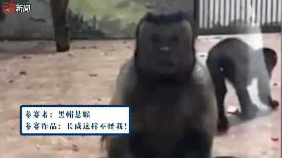 ▲参赛者:黑帽悬猴