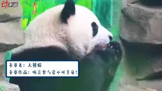 ▲参赛者:大熊猫