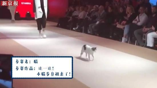 ▲参赛者:猫