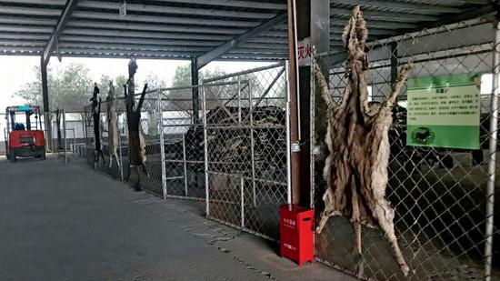 东阿县一家阿胶企业存放驴皮的仓库。摄影/本刊记者 杜玮