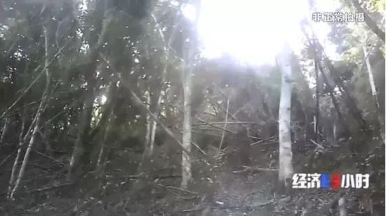已经倒伏的竹林
