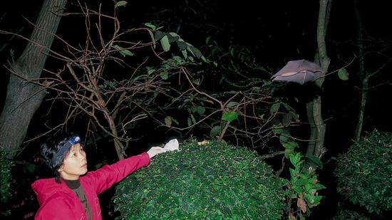 图 | 2004 年,石正丽在广西的一个蝙蝠洞中。(来源:ZHANG SHUYI)