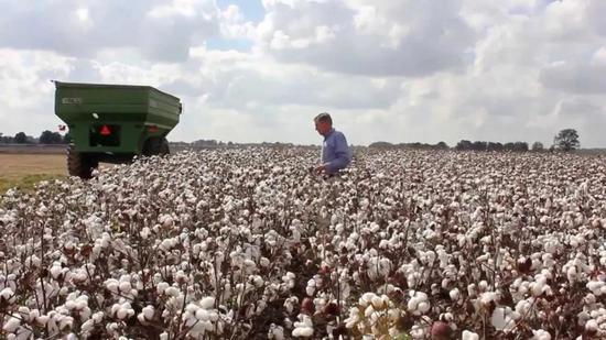 美国棉花生产却陷入每况愈下的境地。来源:GJ