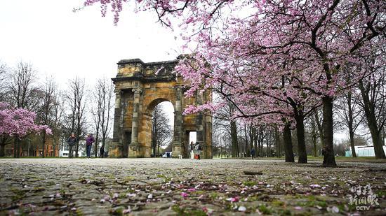 △3月31日,英国格拉斯哥樱花绽放。今年11月份,第26届联合国气候变化大会将在这里举行。(图/视觉中国)