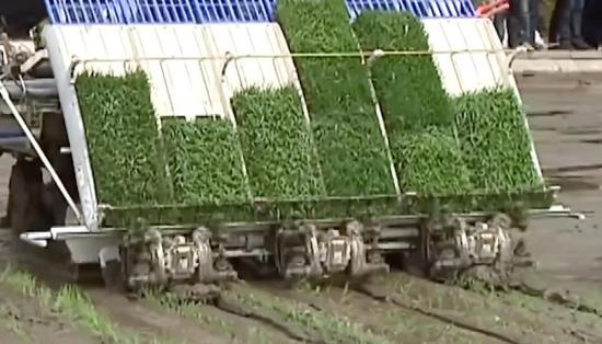 ▲水稻插秧机正在工作。(《南华早报》报道截图)