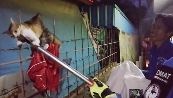 救援人员用钳子小心翼翼地把它从金属栏杆上拉出来