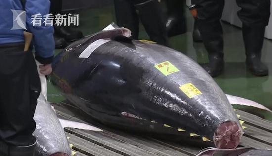 """日本金枪鱼新年拍卖会 """"鱼王""""拍出近2亿日元"""