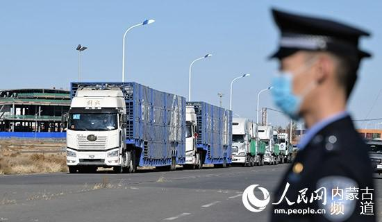 4000只蒙古国施舍羊经二连浩特口岸入境中国。陈立庚 摄