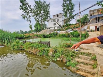 6月12日,阜南县郜台乡桂庙村,养殖户李大夫家的鱼塘被污水污染。