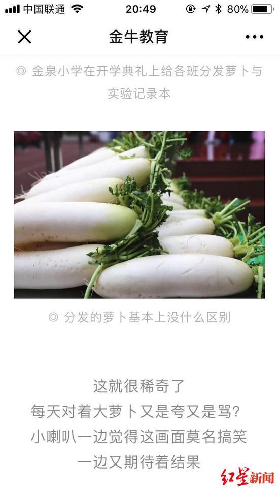 """▲金牛教育发表的关于""""萝卜实验""""的文章"""
