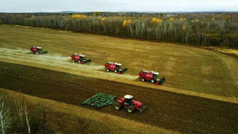 俄罗斯农场内大型收割机正在收获大豆(图片来源:哈尔滨日报)