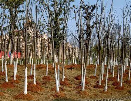 △ 江西为了应付检查,路边种着没有根的小树(图来自中国经济周刊)