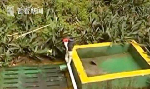 受降雨影响,北京公交44条线路采取临时措施