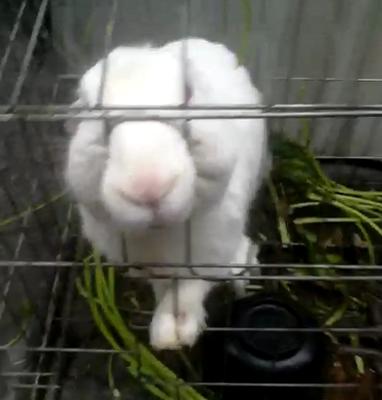 (咬人的大兔子)