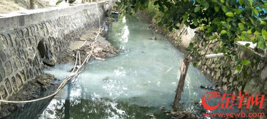 """广州河涌一夜变""""牛奶河""""。金羊网 图"""