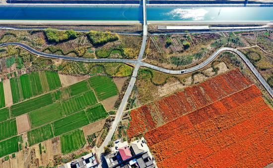 ↑位于河北邯郸境内的南水北调中线干渠及沿岸景色(2019年11月14日摄,无人机照片)。