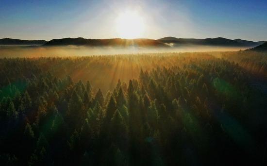 ↑塞罕坝国家森林公园晨景(2021年6月27日摄,无人机照片)。