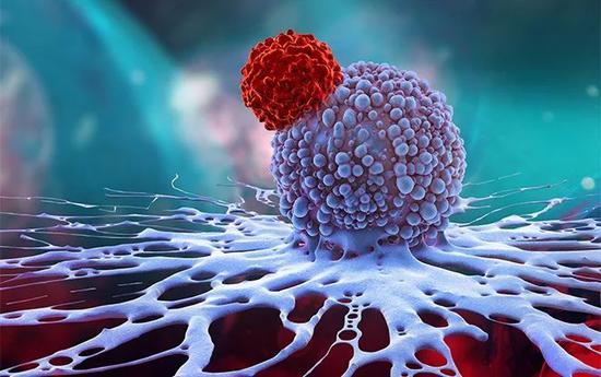 【蜗牛棋牌】诺奖风向标 B细胞T细胞发现者斩获2019拉斯克奖