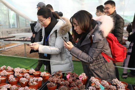 可爱的多肉植物吸引了采访团记者的目光