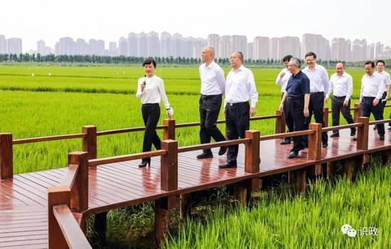 绿色生态屏障区里小站稻飘香
