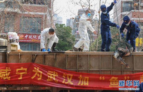 一批运到武汉市硚口区华生汉口城市广场社区的活鱼在卸货(3月13日摄)。 新华社记者 程敏 摄