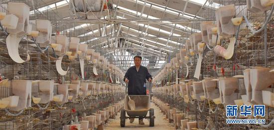 3月20日,在河南省西华县红花镇杜岗村富民蛋鸽养殖场,脱贫户李少洪在鸽舍忙碌。 新华社记者 韩朝阳 摄