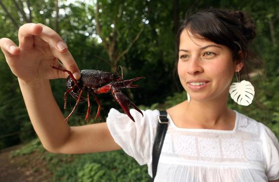 """2017年8月24日,德国柏林,蒂尔加滕公园出没的入侵物种克氏原螯虾(俗称""""小龙虾"""")。图/视觉中国"""