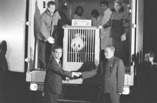 """1980年1月29日晚,中国赠送给日本的大熊猫""""欢欢""""抵达东京上野动物园。北京动物园主任李长德(右)和上野动物园园长浅仓繁春握手。新华社发"""