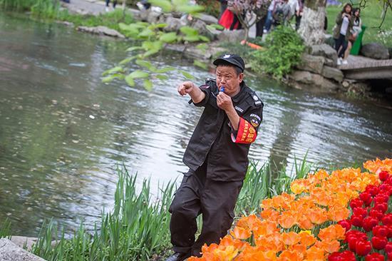 """景区放哨队员老李一面吹口哨,一面""""咆哮"""",制止旅客踏入郁金花丛。视觉我国 图"""